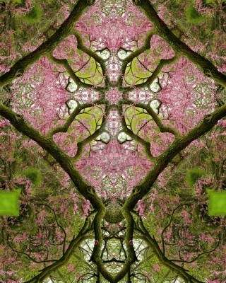 kaleidoscope tree and flower image