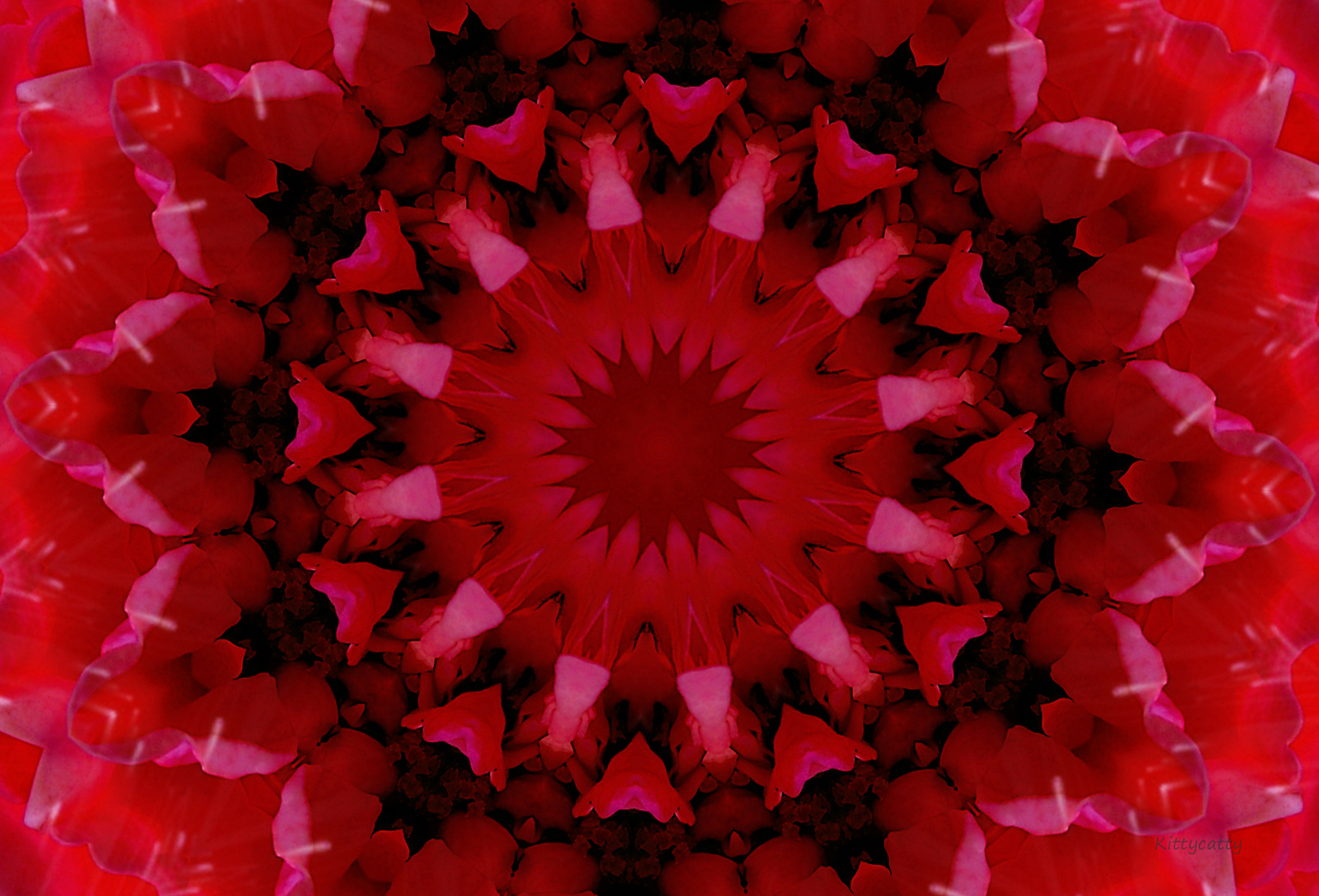 red flower mandala image