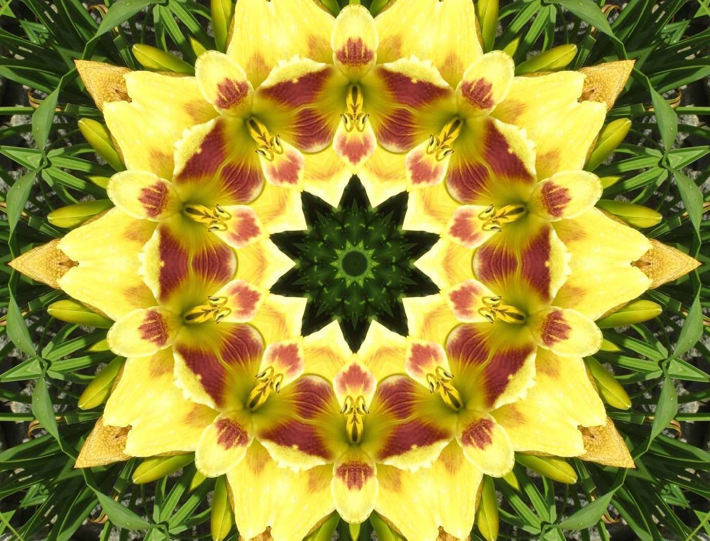 yellow flower mandala image